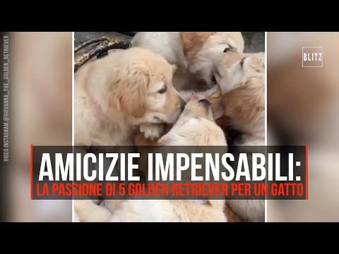 Cuccioli Di Cane Ricoprono Di Baci Un Gatto Ecco Il Video Radio 105