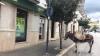 Parcheggia l'asinello e va in banca: la foto diventa virale