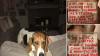 Cane ritrovato con uno straziante messaggio sul collare