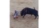 Torero incornato durante la corrida: la scena è impressionante