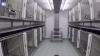 Laboratorio horror scoperto in Germania: scimmie, cani, gatti e conigli torturati per esperimenti