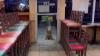 Cane randagio si presenta ogni giorno in una paninoteca, il video virale