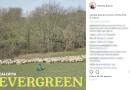 """Calcutta tra le pecore nella copertina del suo nuovo album """"Evergreen"""""""