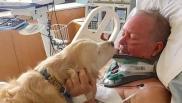USA: così un cane ha salvato il proprietario paralizzato nella neve