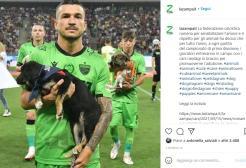 Romania: in serie A cani randagi in campo per favorire le adozioni