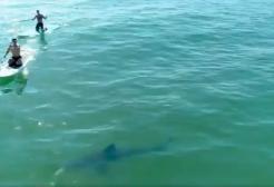 Orlando Bloom fa Paddleboarding con lo squalo bianco a fianco