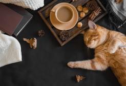 Il Crazy Cat Cafè vittima di shitstorm a causa di un twitcher molesto