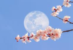 La Superluna dei fiori arriva il 26 maggio!