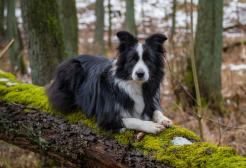 Il cane diventa sordo e impara la lingua dei segni