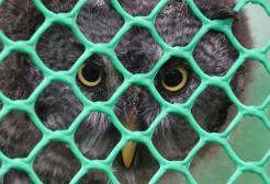 Il Presidente Macron vuole autorizzare il bracconaggio di 110mila uccelli selvatici