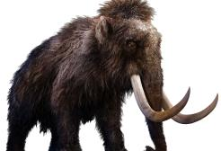 15 milioni di dollari per riportare in vita il mammut