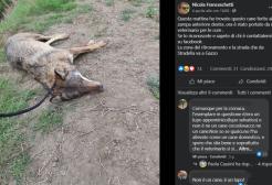 Posta la foto del cane appena ferito ma si tratta di una lupa!