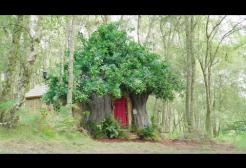 Su Airbnb è disponibile la casa ispirata a WInnie The Pooh