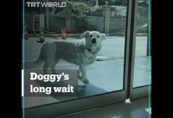 Questo cagnolino ha aspettato per giorni il padrone malato fuori dall'ospedale