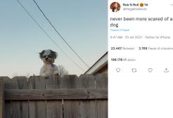 C'è un cane uguale al clown di It che sta terrorizzando il web