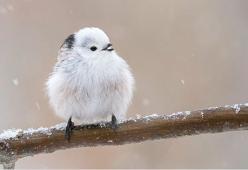 Questi uccellini sono la cosa più tenera (e morbida) che vedrai oggi
