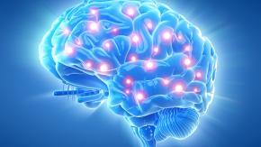 """La proteina che dà i """"super poteri"""" all'uomo per memoria e orientamento"""