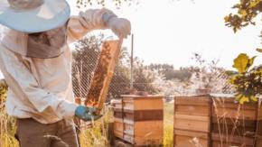 La casa automobilistica Porsche ora produce anche miele
