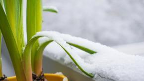 Primavera al gelo: le temperature si abbasseranno di 10 gradi