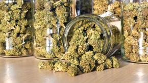 Il Consiglio superiore della sanità dice no alla cannabis light in Italia