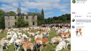 150 anni fa la prima cucciolata di Golden Retriever: ecco i festeggiamenti in Scozia
