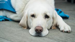 Vieta l'accesso al cane guida: multato uno storico bar di Napoli