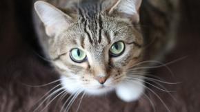 La gatta impazzisce e chiude la padrona per due giorni in cucina