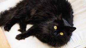 Giornata del Gatto Nero: il 17 novembre si festeggiano i mici neromantati