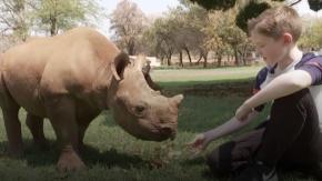 Undicenne raccoglie 14mila euro per salvare cuccioli di rinoceronte
