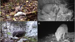 A Chernobyl la natura rinasce: avvistati diversi animali