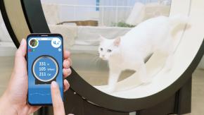 Ecco il tapis roulant per mettere a dieta il proprio gatto