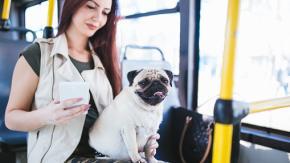Milano, cani e gatti viaggeranno gratis sui mezzi pubblici