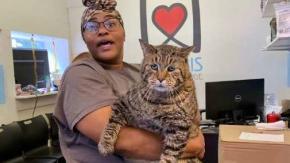 Il gatto più paffuto del mondo cerca casa