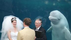 Questa foto di matrimonio (con il beluga che fa photobombing) è diventata un meme divertentissimo