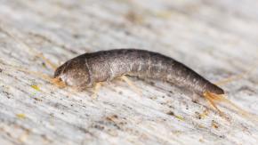 5 rimedi naturali per eliminare i pesciolini argentati dalle nostre case