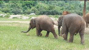 Elefantino gioca a calcio