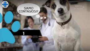 Bufale sugli animali al tempo del coronavirus: l'ENPA fa chiarezza con un video