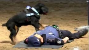 L'incredibile video del cane che effettua il massaggio cardiaco all'amico poliziotto