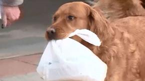 Questo cane consegna ogni giorno la spesa all'anziana vicina in isolamento