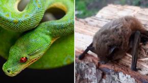 Il virus cinese sarebbe stato causato da serpenti e pipistrelli
