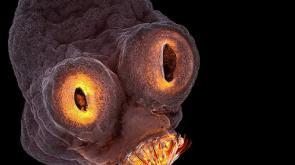Set Bagno Rana : Questo video ha fatto milioni di clic: mostra una minuscola rana che
