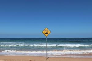 Muore surfista di 31 anni attaccato da uno squalo