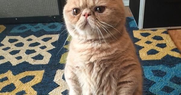 Ecco George, il gatto che ti giudica.