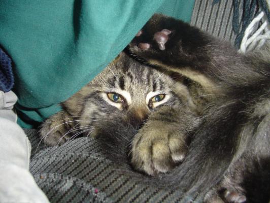 Dating sito amanti del gatto titoli incredibili per siti di incontri