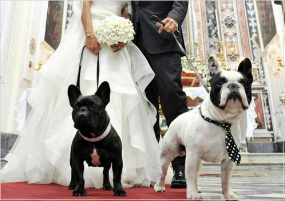 Matrimonio Uomo Cane : Volete il cane al vostro matrimonio ci pensa wedding dog