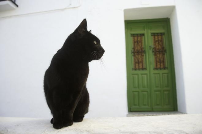 Associazione italiana Difesa animali, gatti: in Italia sono 20 milioni