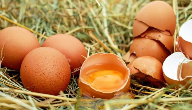 Circa 200 uova contaminate sequestrate ad Orbetello