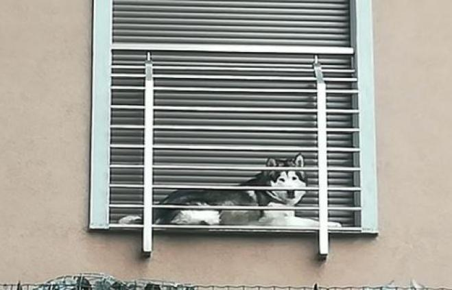 Cane sul davanzale con la finestra chiusa la denuncia su - Davanzale finestra ...