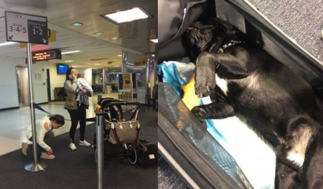 Cane obbligato a viaggiare nella cappelliera dell aereo muore durante il  volo 5a0925342dab