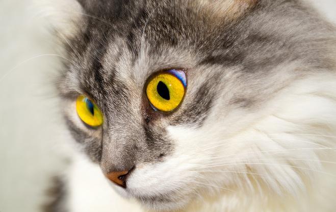 I gatti riconoscono il proprio nome: lo conferma una ricerca